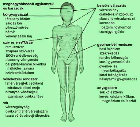 étrend anorexiásoknak)