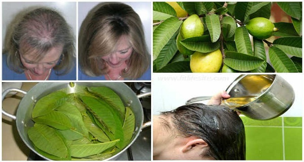 fogyjon guava levelekkel b12 hiány nehéz fogyni