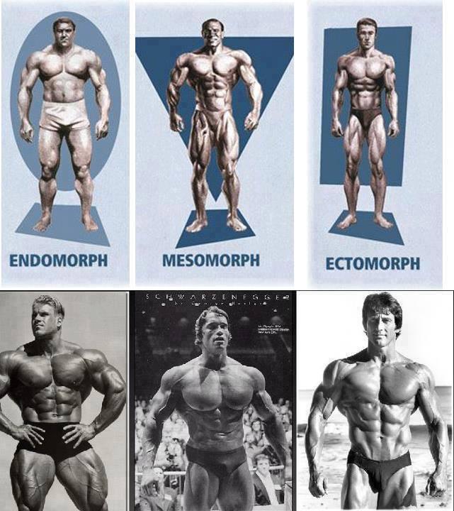 az endomorf zsírvesztés legjobb módja
