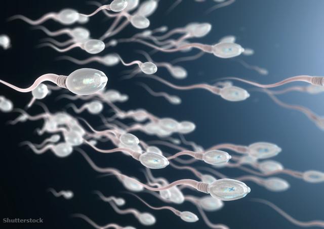 fogyás spermiumok száma hogyan fogyhatok el gyorsan a hasi zsír
