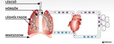 légzési technikák zsírégetésre mircette fogyás