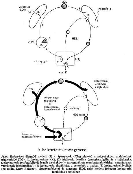 10 betonbiztos módszer a gyors zsírégetésre: nem varázslat, tudomány - Fogyókúra | Femina