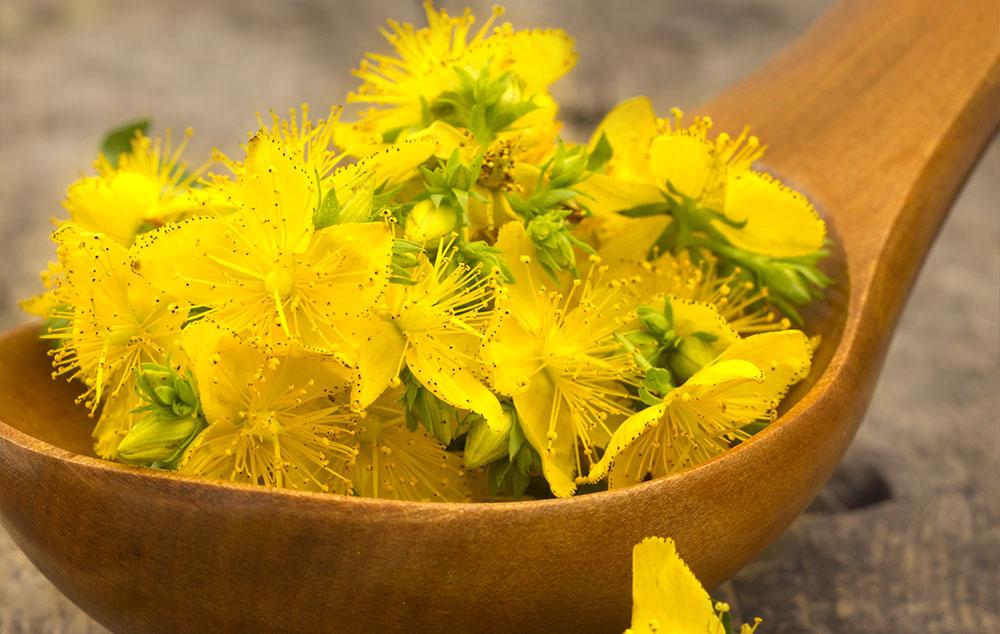 gyógynövények amelyek segítenek a zsírvesztésben